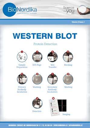 Western Blot Brochure
